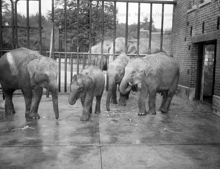 Prospect Park: Baby Elephants (Prospect Park Zoo)